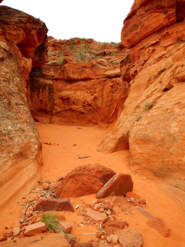 Speckled wash, Red Cliffs National Conservation Area, Utah
