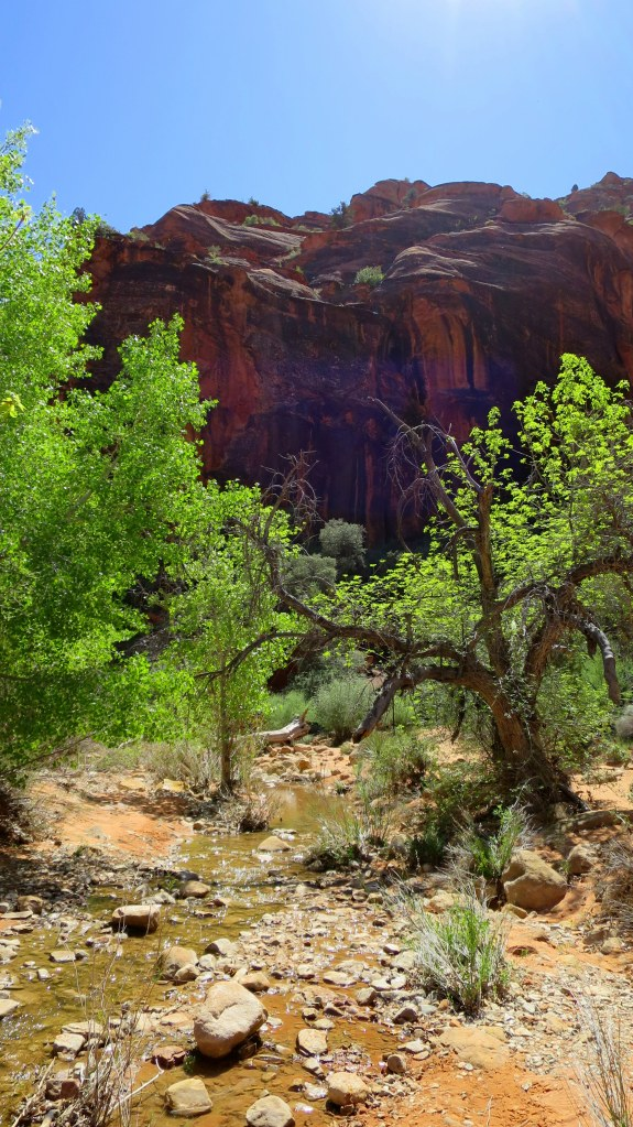 Red Reef Trail, Red Cliffs National Conservation Area, Utah