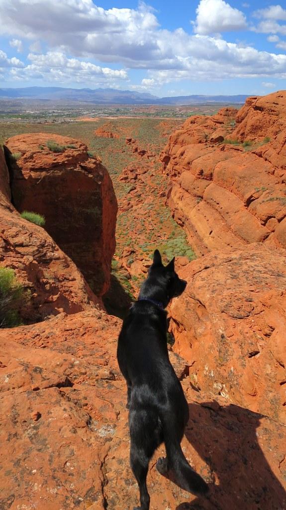 View at the top, Dino Cliffs, Red Cliffs Desert Reserve, Utah