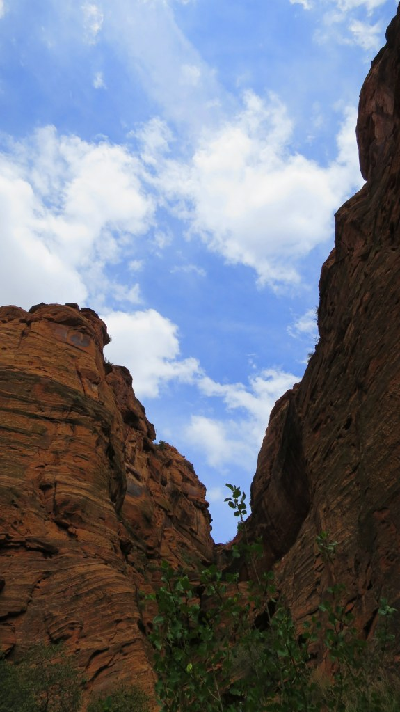 Looking up in the canyon, Red Cliffs Conservation Area, Utah