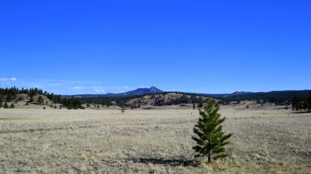 View of the prairie, Florissant Fossil Beds National Monument, Colorado