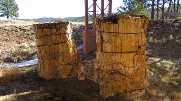 Petrified redwood stumps, Florissant Fossil Beds National Monument, Colorado