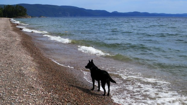 Abby is introduced to Lake Superior, Lake Superior Provincial Park, Ontario, Canada