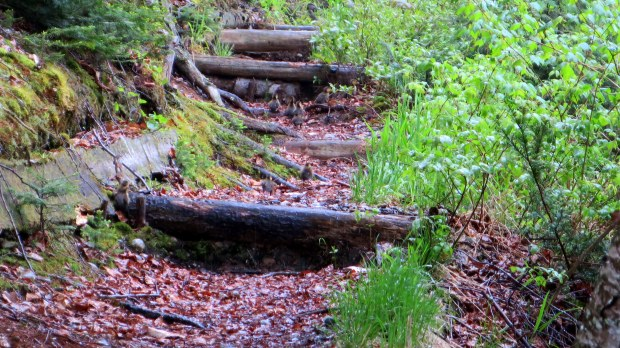 Blurry shot of baby ducks, Orphan Lake Trail, Lake Superior Provincial Park, Ontario, Canada