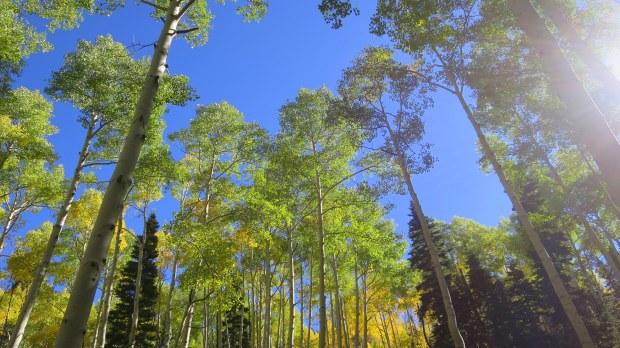 Turning yellow on the Rattlesnake Creek Trail, Ashdown Gorge Wilderness, Utah
