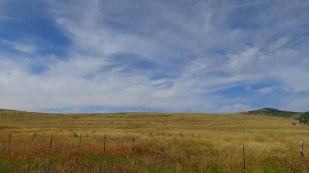 Mountain pasture, Utah