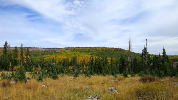 Meadow in Dixie National Forest, Utah