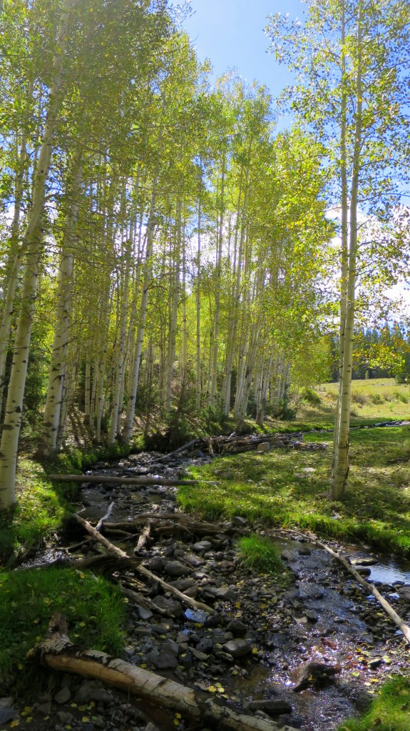 Walk on the first day of autumn, Yankee Meadows, Dixie National Forest, Utah