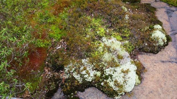 Mosses and lichen, Carden Cove, Marathon, Ontario, Canada