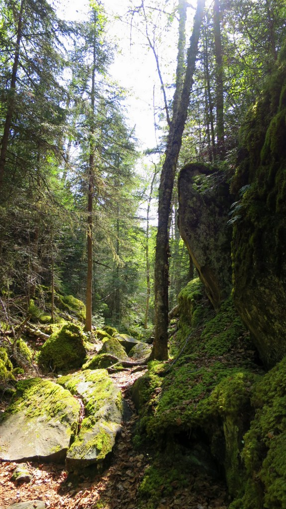 Moss-covered ravine, Coastal Trail, Pukaskwa National Park, Ontario, Canada