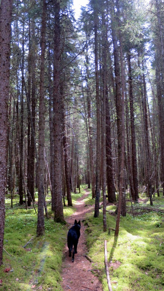 Abby in White Pine Forest, Coastal Trail, Pukaskwa National Park, Ontario, Canada