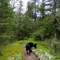 Neys Provincial Park, Part 1: Dune Trail, a Beach Exploration, and More