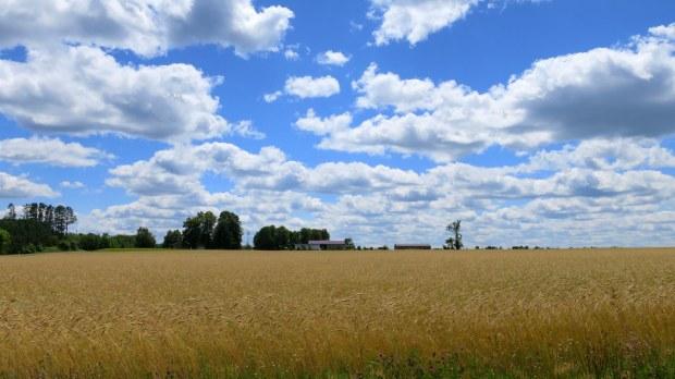 Fields en route to Potato River Falls, Wisconsin
