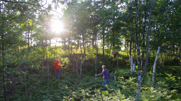 Bushwacking over the mountain top at an unknown park, Michigan