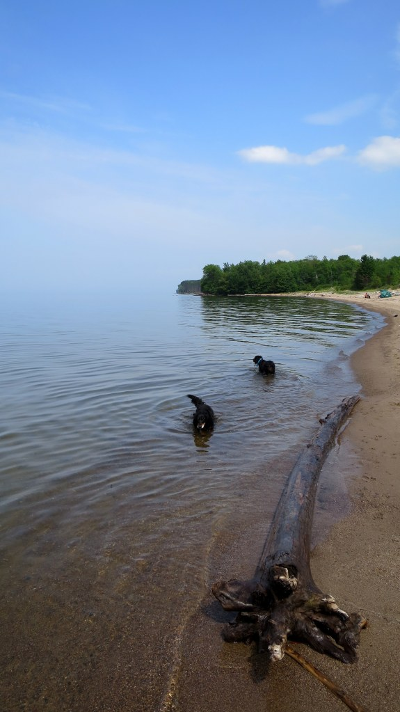 Missy and Gabby cooling off in Lake Superior near Silver City, Michigan