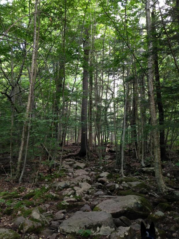 North Mountain Trail, Catskills, New York