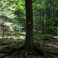 North Mountain Trail, Catskill Mountains