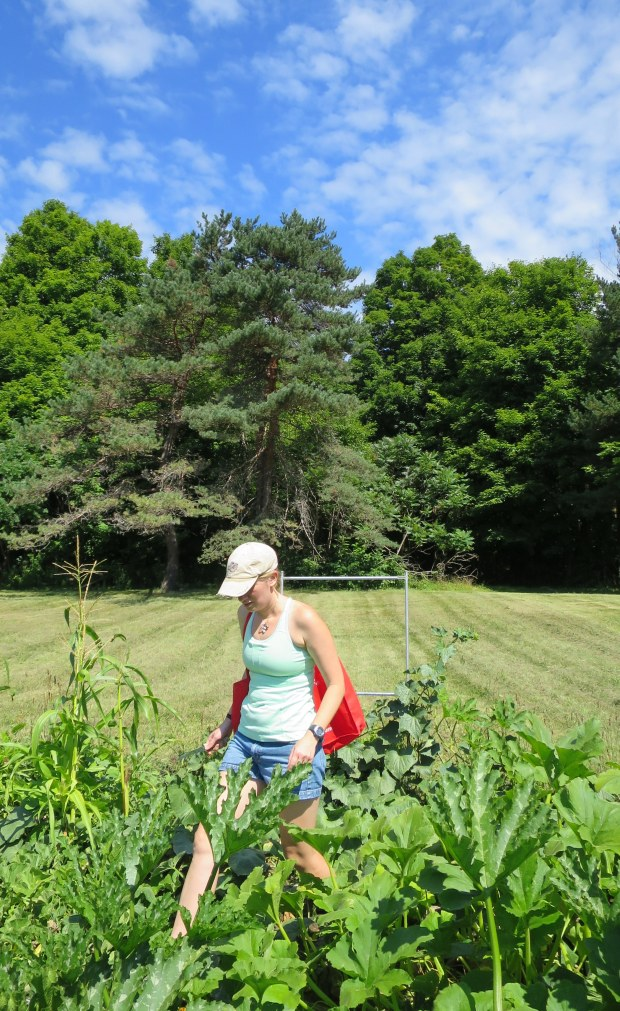 Rachel harvesting in the garden, New York