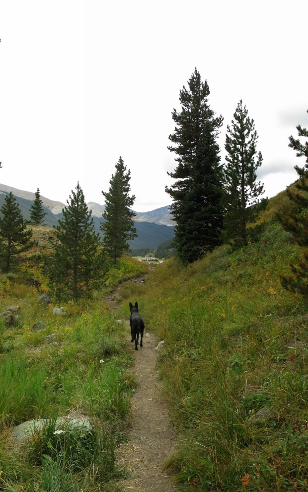 Abby on the Gore Range Trail, White River National Forest, Colorado