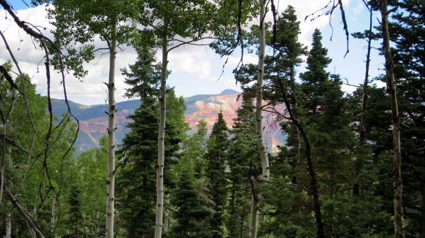 View into Blowhard Hollow from near the beginning of the descent, Dixie National Forest, Utah