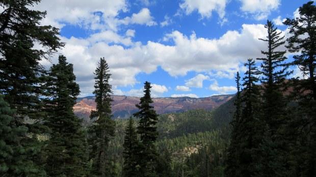 Looking through the trees into Potato Hollow, Potato Hollow Trail, Dixie National Forest, Utah