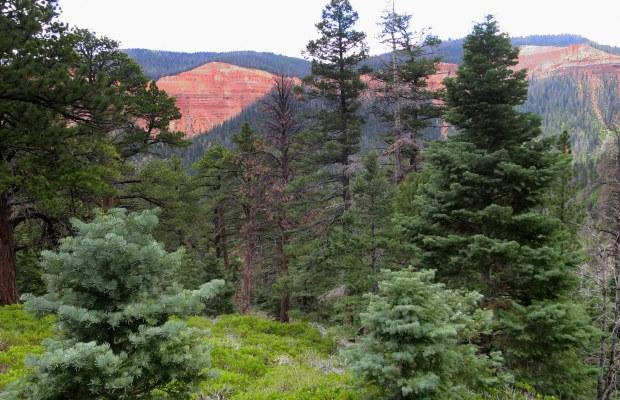 Potato Hollow Trail, Dixie National Forest, Utah