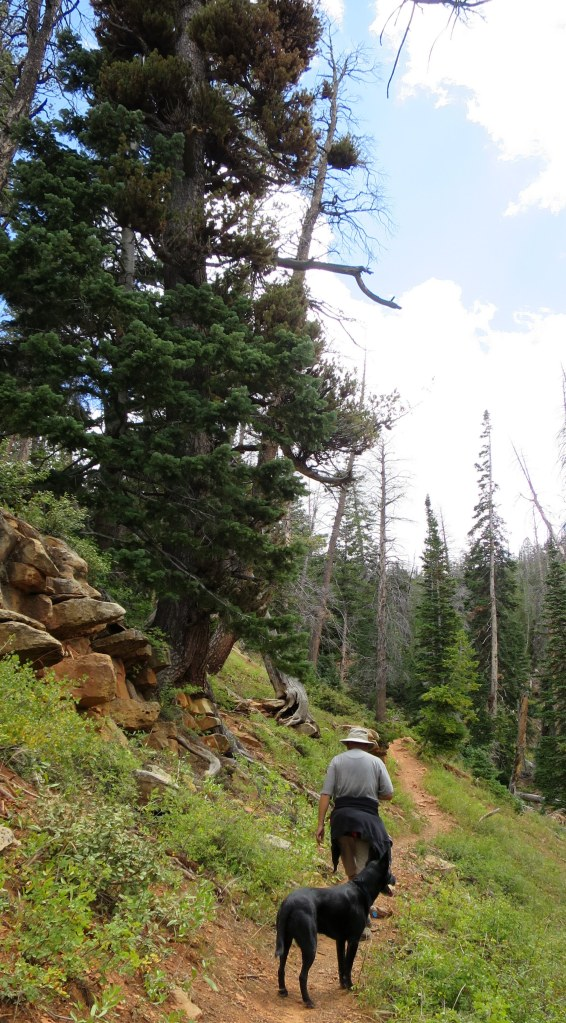 Terry and Abbs on the Blowhard Trail, Dixie National Forest, Utah