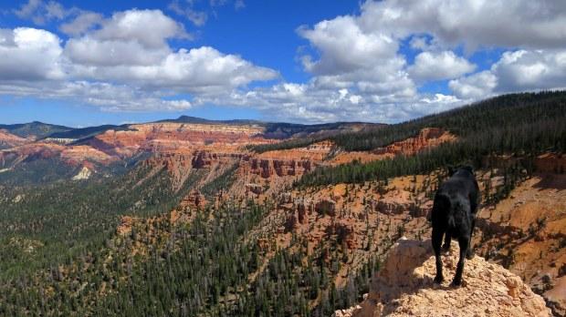 Abby, Blowhard Trail, Dixie National Forest, Utah