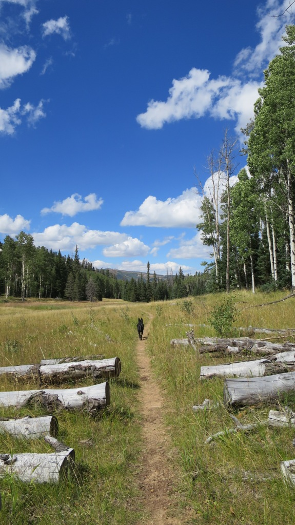 Blowhard Trail looping back to Crystal Springs Trailhead, Dixie National Forest, Utah