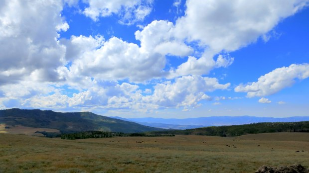 Meadows and cows, Fishlake National Forest, Utah