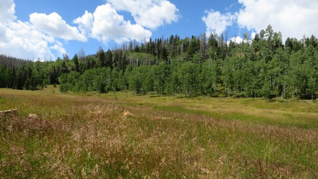 Meadow at west end of Navajo Lake Loop Trail, Dixie National Forest, Utah