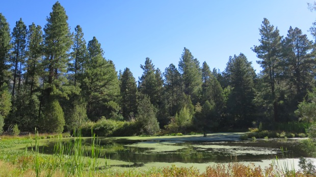 Pond, Copes Basin Trail, Fishlake National Forest, Utah