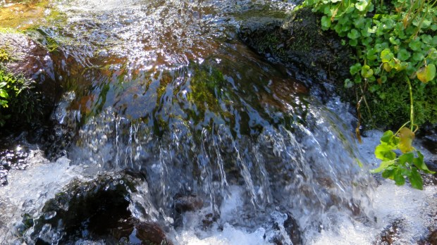 Closeup of stream flowing to Anderson Meadows, Fishlake National Forest, Utah