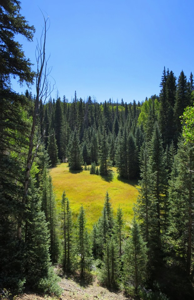 Another meadow over the ridge, Fishlake National Forest, Utah