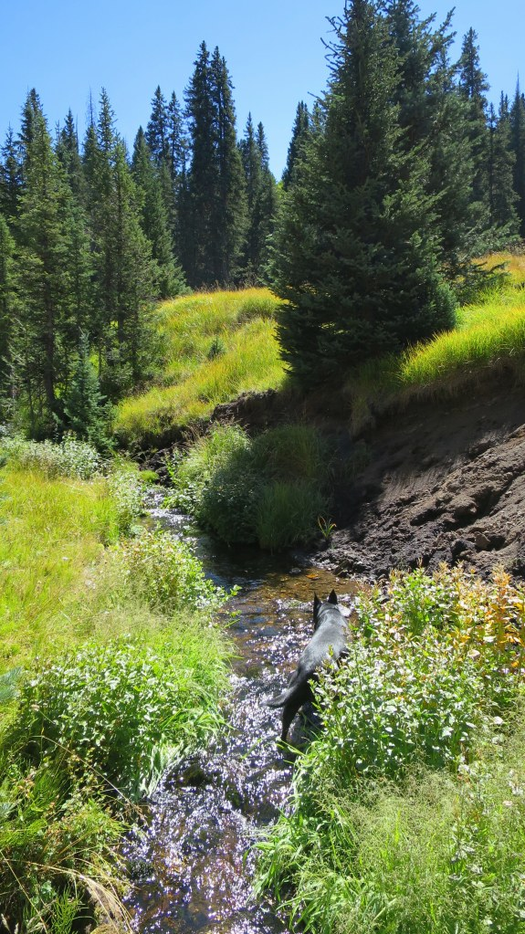 Crossing a stream, Fishlake National Forest, Utah