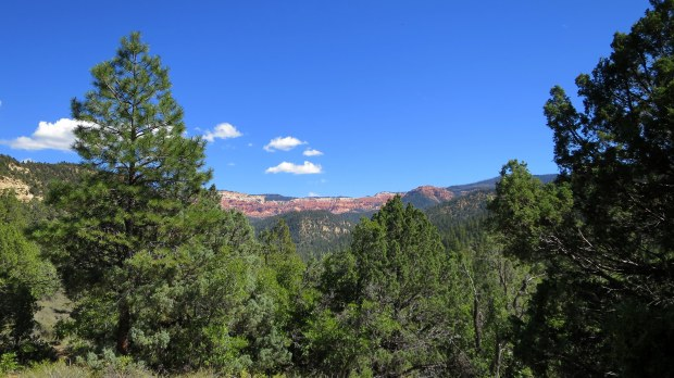 Looking back to Cedar Breaks from Rattlesnake Trail, Ashdown Gorge Wilderness, Dixie National Forest, Utah