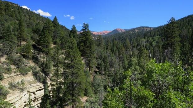 Descending into the Gorge, Rattlesnake Trail, Ashdown Gorge Wilderness, Dixie National Forest, Utah