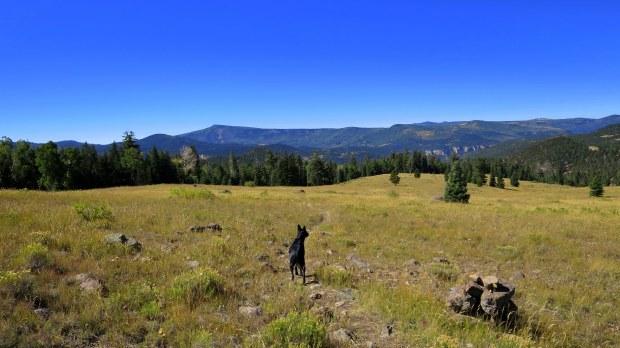 High meadow on Rattlesnake Trail, Ashdown Gorge Wilderness, Dixie National Forest, Utah