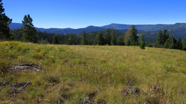 One more of the big meadow on the Rattlesnake Trail, Ashdown Gorge Wilderness, Dixie National Forest, Utah