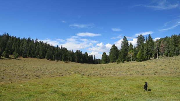Yankee Meadows, Dixie National Forest, Utah