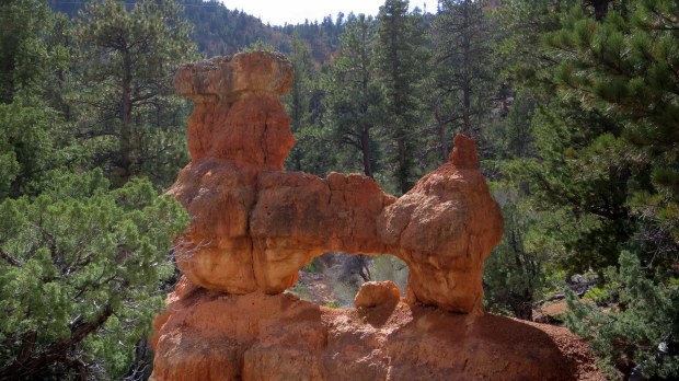 Alpaca rock, Golden Wall Trail, Red Canyon, Dixie National Forest, Utah