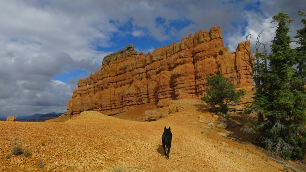 Abby leading the way, Golden Wall Trail, Red Canyon, Dixie National Forest, Utah