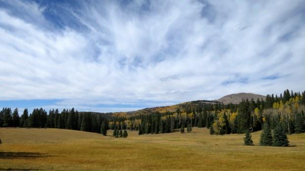 Meadows near Big John Flat, Fishlake Mountains National Forest, Utah