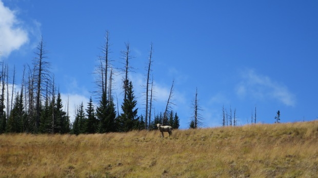 The face off, Sidney Peaks Trail, Dixie National Forest, Utah