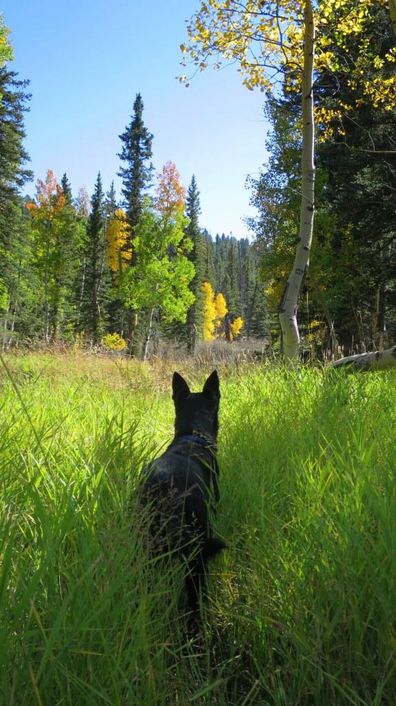 Near Duck Creek, Dixie National Forest, Utah