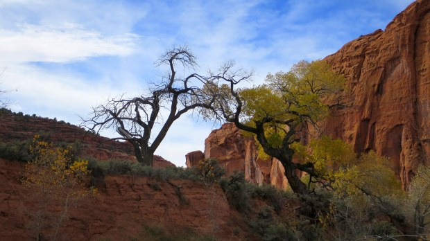 The Upper Gulch, Burr Trail, Grand Staircase-Escalante National Monument, Utah