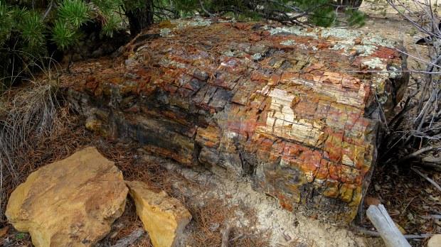 Petrified Forest Trail, Escalante Petrified Forest State Park, Utah