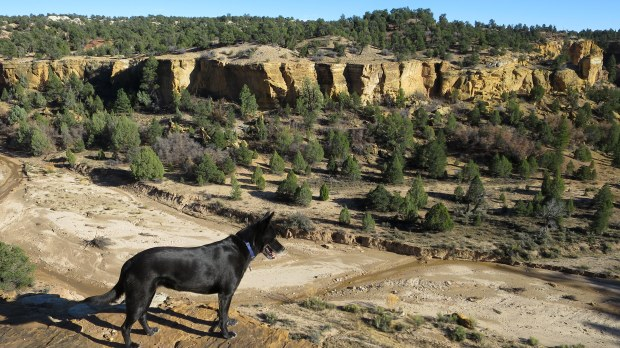 Abby taking in the views, Grand Staircase-Escalante National Monument, Utah