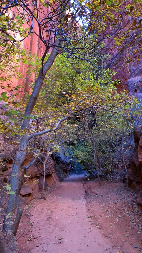 Entrance to short slot canyon off Burr Trail, Grand Staircase-Escalante National Monument, Utah