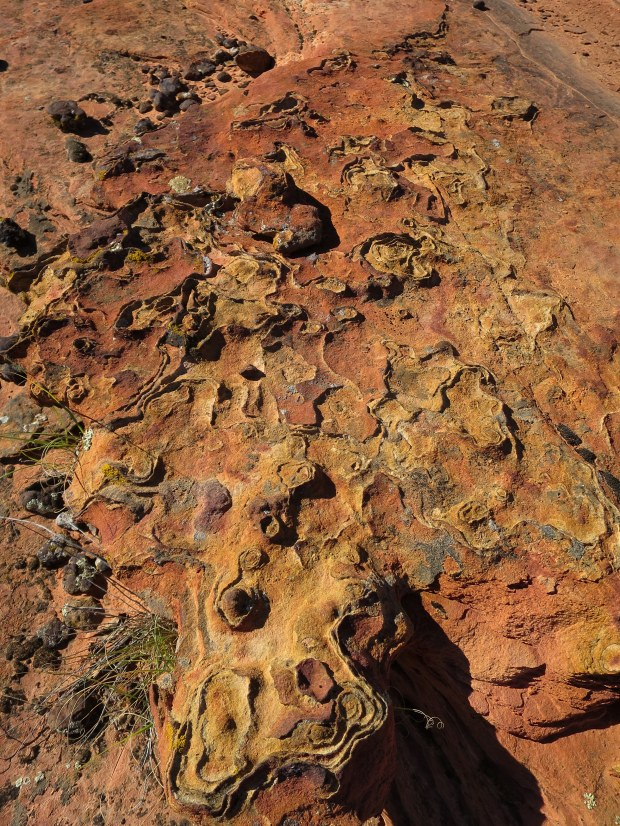 More iron oxide, Red Cliffs National Conservation Area, Utah